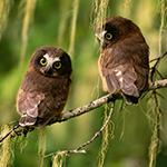 Lightbox Owl